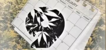 Friday Releases Diedjoe